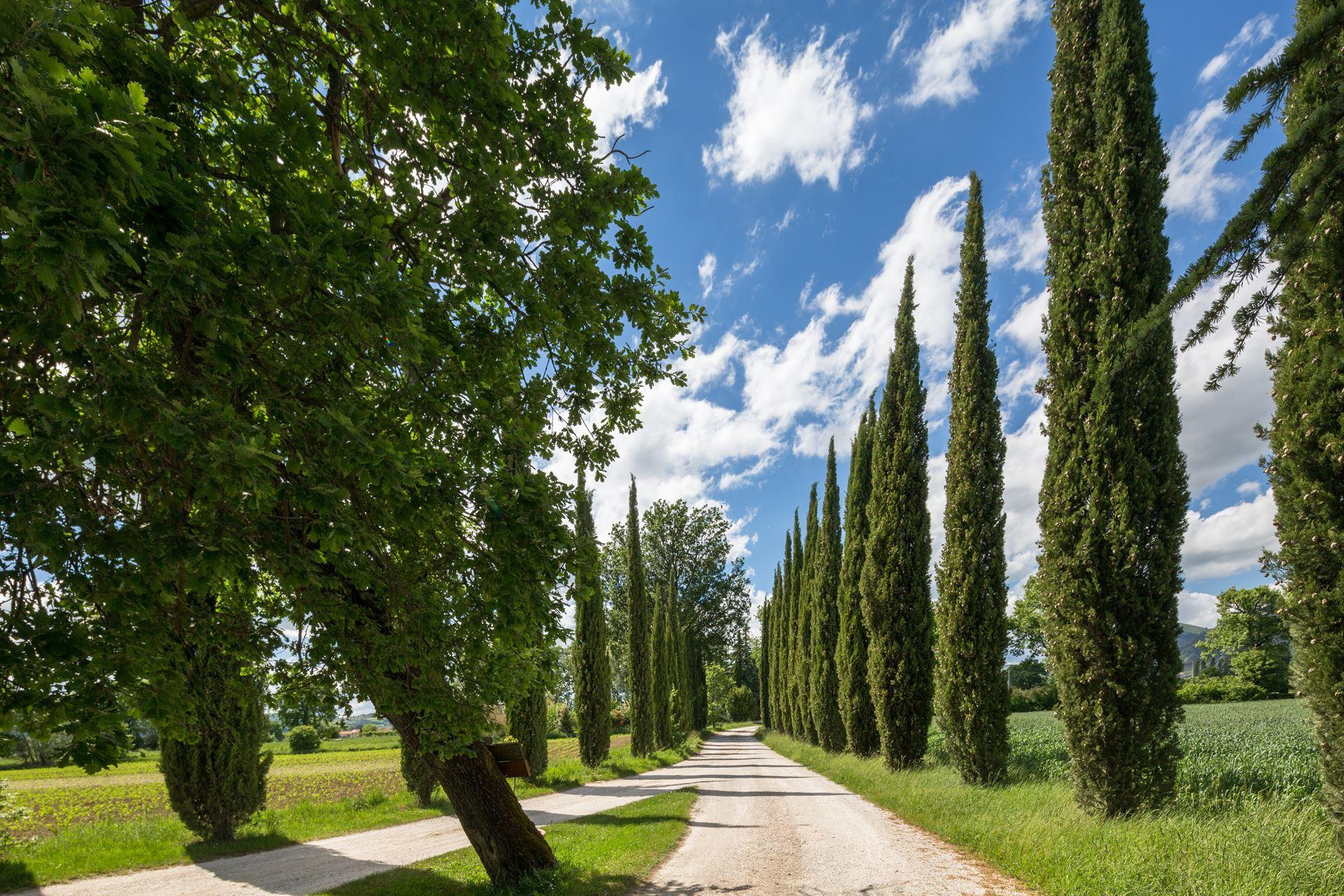 il bellissimo viale di cipressi che porta all'agriturismo Casella del Piano